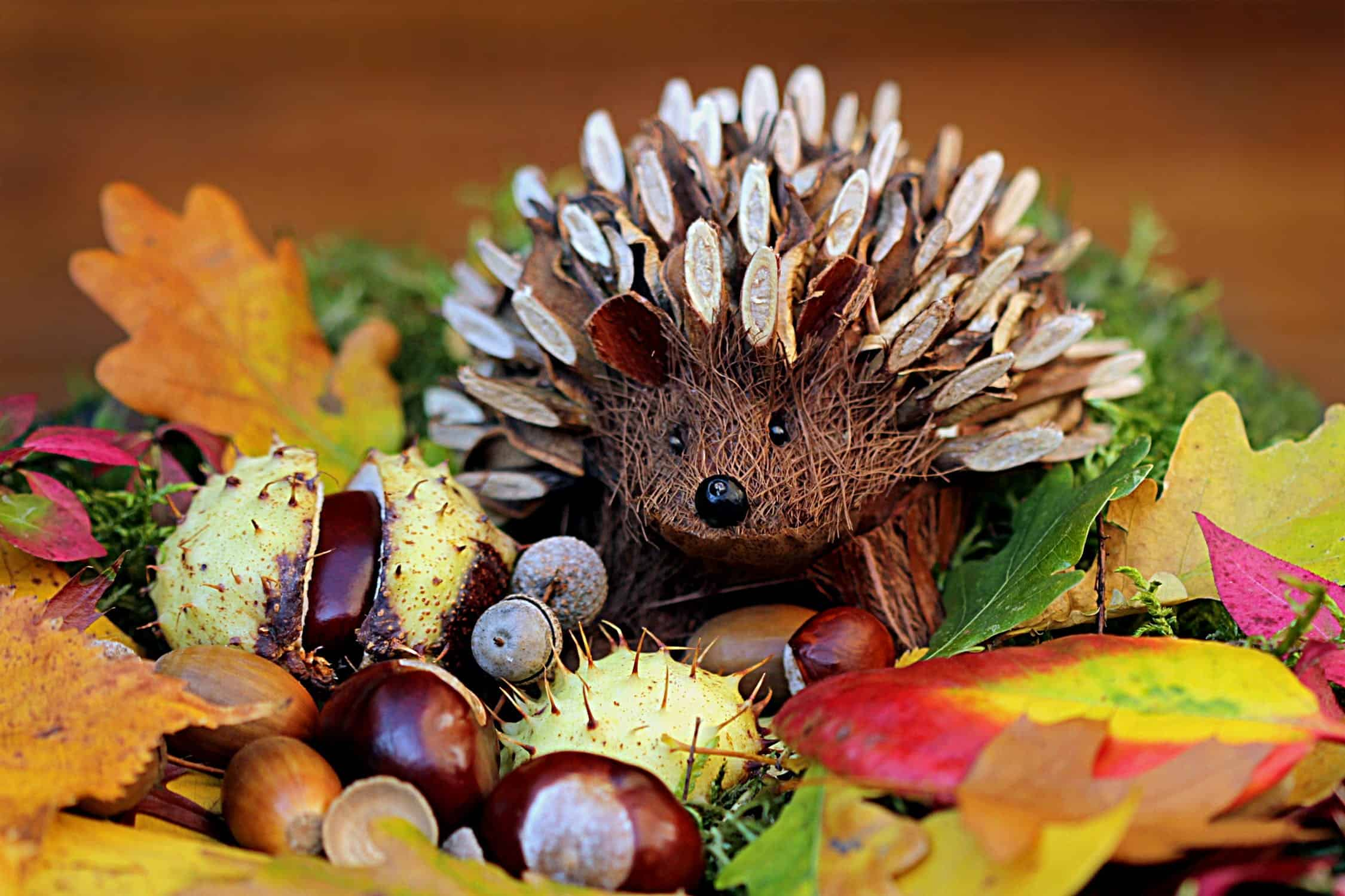 A fake hedgehog on display with conkers and autumn leaves